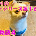 【大海物語4】実践パチンコバイト 第161回