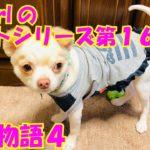 【大海物語4】実践パチンコバイト 第164回