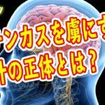 煽り過ぎの演出 脳汁音 パチンコにハマるのは仕組まれていた? パチンカスの脳のメカニズム